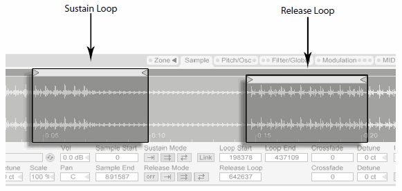 Ableton live Sustain and Release Loops.png